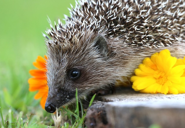 ježek a květiny