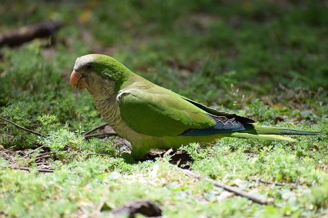 Papouškem v Madridu
