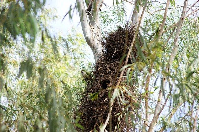 jejich hnízda mohou vážit až několik kilo